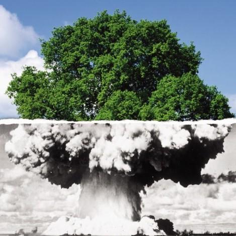 atom-bomb-tree-thumb