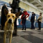 dogs-moscow-small
