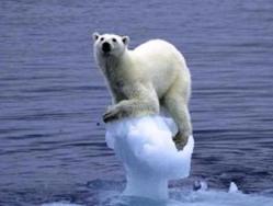global_warming_bear