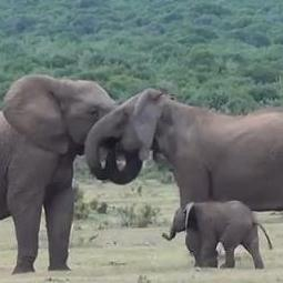 elephant-family-reunion
