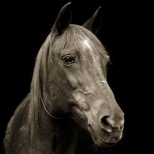 leshko-horse-thumb