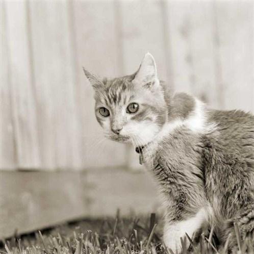 """""""סופי"""", חתולה בת 19"""