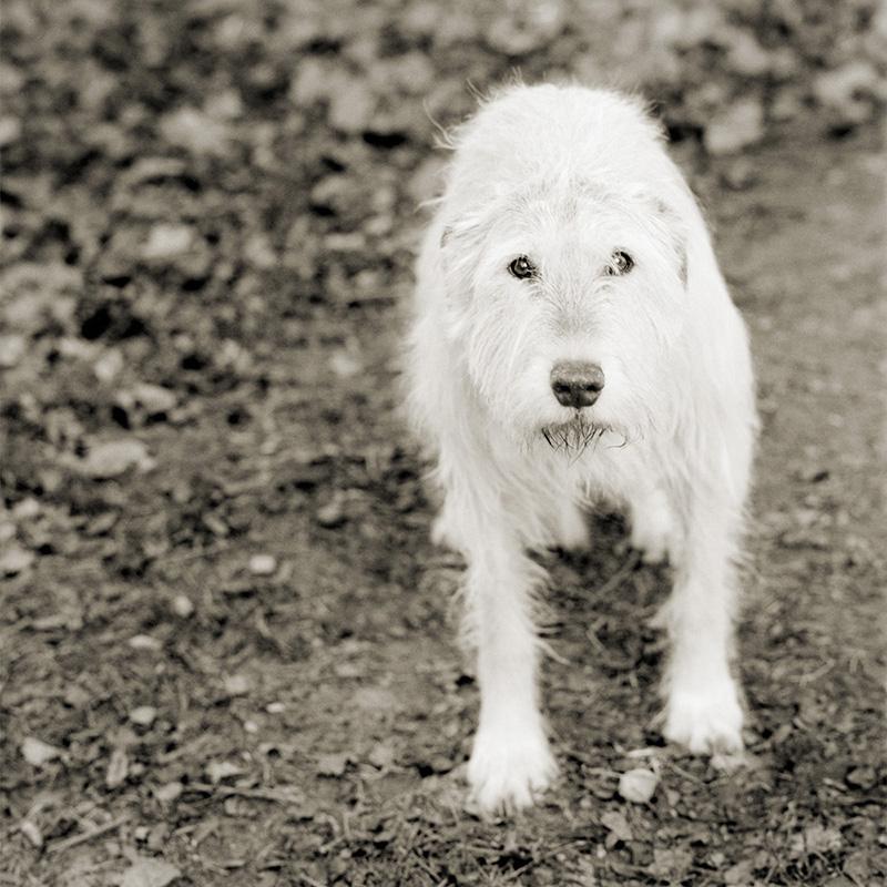 """""""קלי"""", כלבה בת 11"""