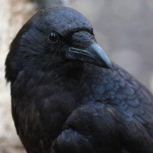 Crow-thumb