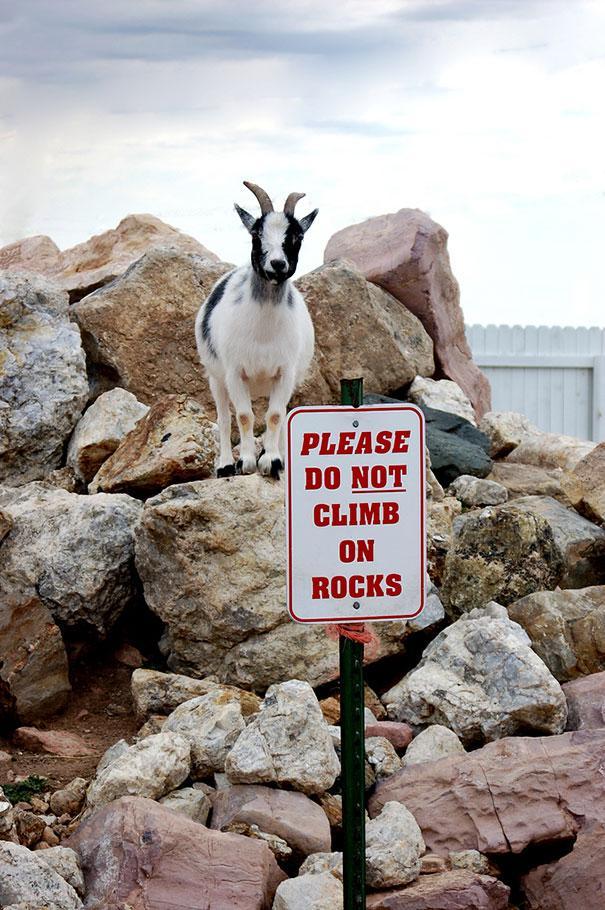 לא לטפס על הסלעים