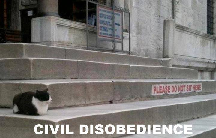 Civil Disobedience Examples Gallery Example Cover Letter For Resume