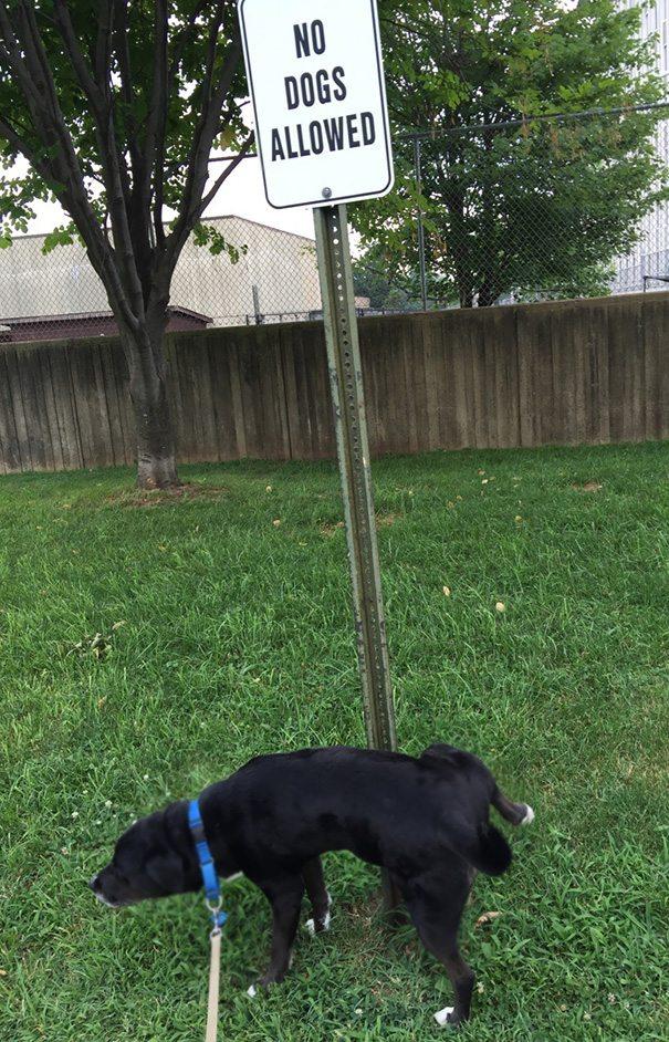 כלב אנרכיסט מספר 2