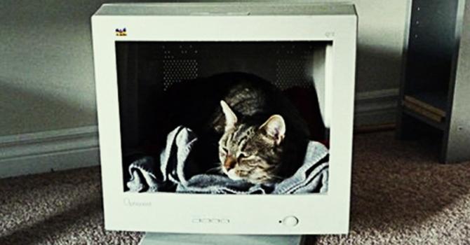 מסך מחשב ישן הפך לפינת זולה לחתול