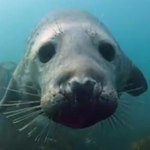seal-thumb