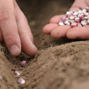 seed-thumb