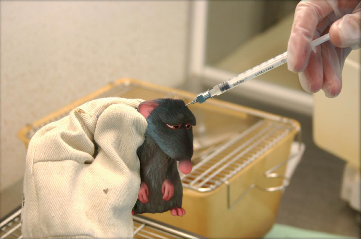 רטטוי - עכבר מעבדה