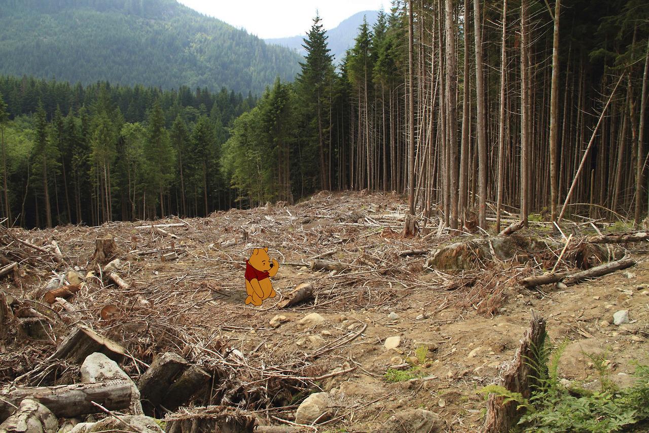 כריתת היער בו גר פו הדוב