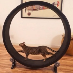 one-fast-cat-exercise-wheel-thumb