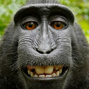 smiling-monkey-thumb1