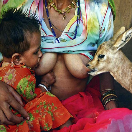 Bishnoi-woman-breastfeeds-gazelle-and-baby-thumb