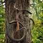 bike-tree-thumb