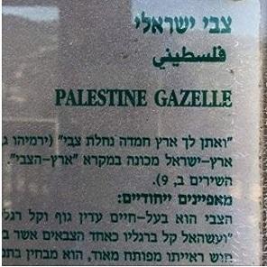 palestine-gazelle-thumb