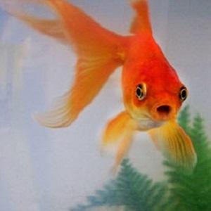 fish-thumb