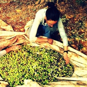 olive-thumb