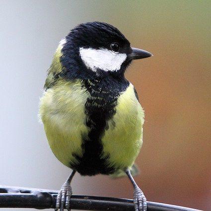 bird-thumb