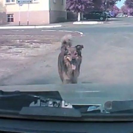 dog-car-thumb