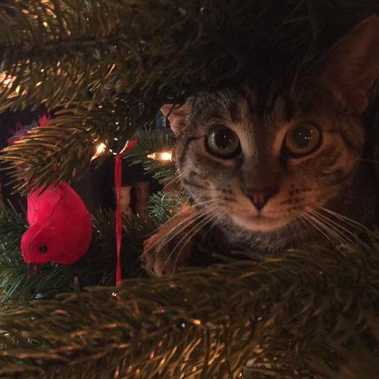 cat-christmas-tree-thumb